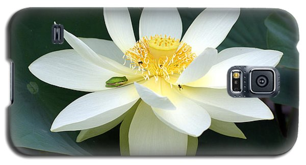The Lotus Flower The Frog And The Bee Galaxy S5 Case