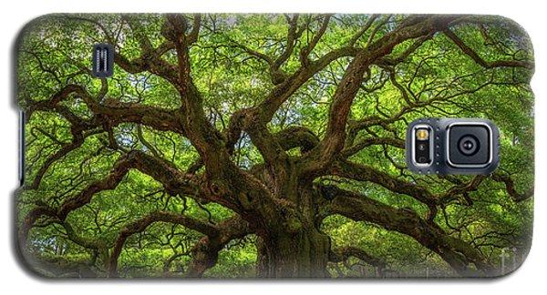 The Magical Angel Oak Tree Panorama  Galaxy S5 Case