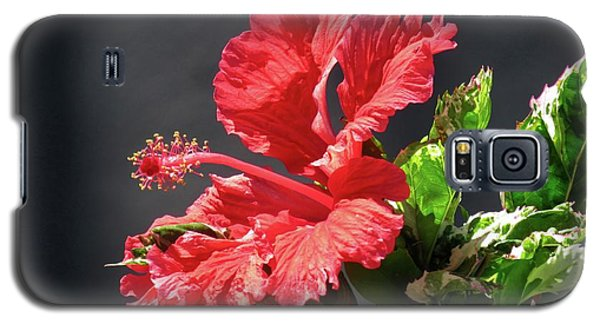 The Mallow Hibiscus Galaxy S5 Case