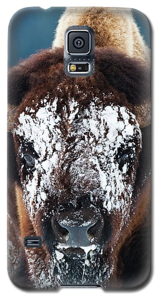 The Masked Bison Galaxy S5 Case