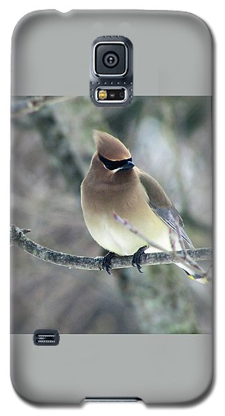 The Masked Cedar Waxwing Galaxy S5 Case