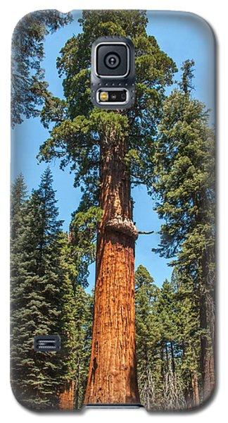 The Mckinley Giant Sequoia Tree Sequoia National Park Galaxy S5 Case