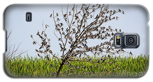 Galaxy S5 Case featuring the photograph The More The Merrier- Tree Swallows  by Ricky L Jones