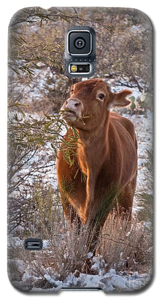 Galaxy S5 Case featuring the photograph The New Years Cow by Donna Greene