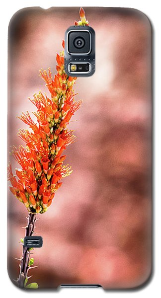 Galaxy S5 Case featuring the photograph The Ocotillo by Onyonet  Photo Studios
