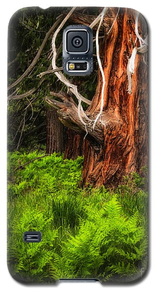 The Old Tree Galaxy S5 Case