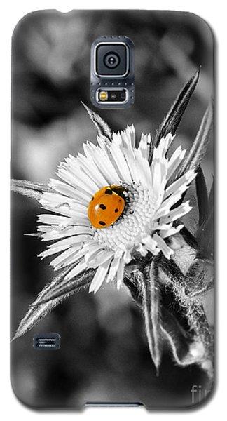 The Orange Spot Galaxy S5 Case
