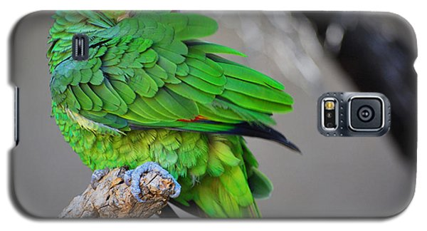 Galaxy S5 Case featuring the photograph The Parrot by Donna Greene