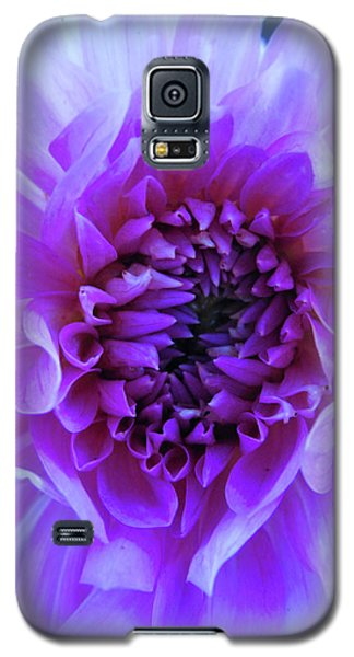 The Passionate Dahlia Galaxy S5 Case