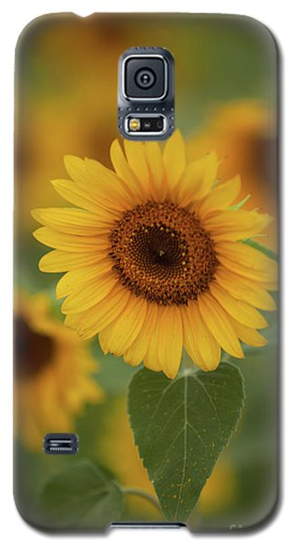 The Patch Of Sunflowers Galaxy S5 Case