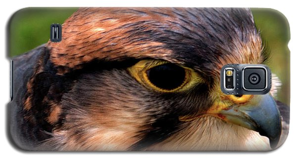The Peregrine Galaxy S5 Case by Stephen Melia
