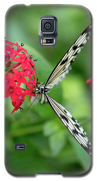The Perfect Butterfly Land Galaxy S5 Case