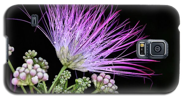 The Pink Mimosa Flower Galaxy S5 Case by JC Findley