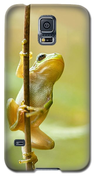 The Pole Dancer - Climbing Tree Frog  Galaxy S5 Case
