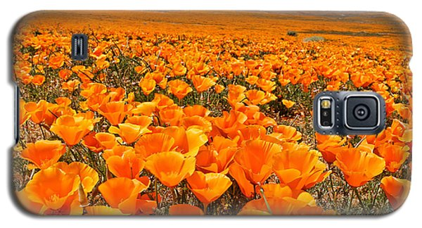 The Poppy Fields - Antelope Valley Galaxy S5 Case