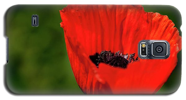 The Poppy Next Door Galaxy S5 Case by Onyonet  Photo Studios