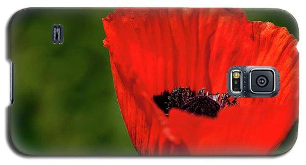 The Poppy Next Door Galaxy S5 Case