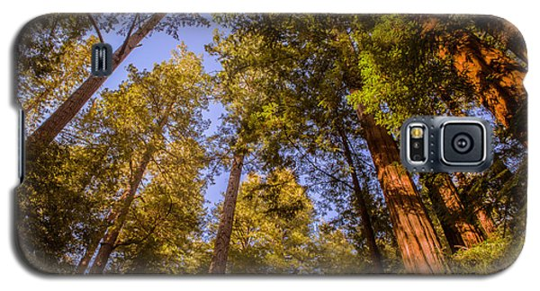 The Portola Redwood Forest Galaxy S5 Case