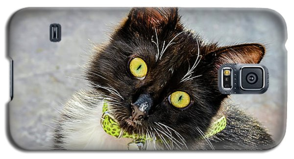 The Portrait Of A Cat Galaxy S5 Case