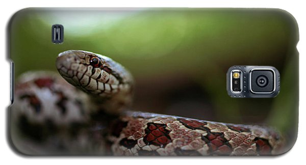 The Prairie Kingsnake Galaxy S5 Case by Kyle Findley