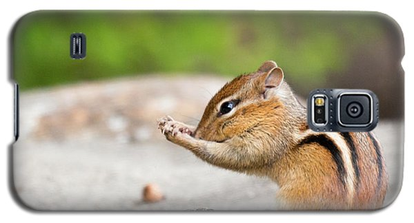 The Praying Chipmunk Galaxy S5 Case