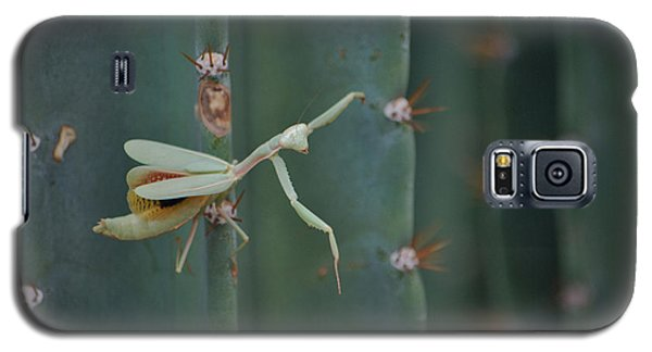 Galaxy S5 Case featuring the photograph The Praying Mantis by Donna Greene