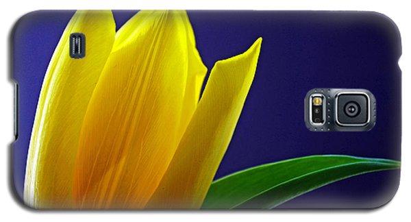 The Present Galaxy S5 Case