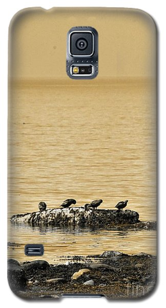 Galaxy S5 Case featuring the photograph The Quatuor - Gold by Aimelle