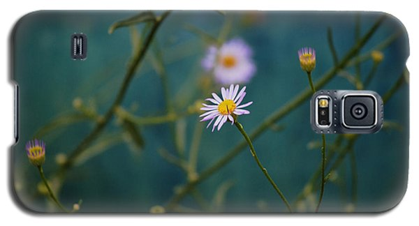Galaxy S5 Case featuring the photograph The Quiet Aster by Douglas MooreZart