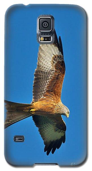 The Red Kite - Milvus Milvus Galaxy S5 Case
