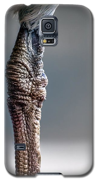 The Seagulls Knee  Galaxy S5 Case by Bob Orsillo