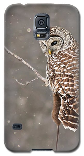 The Silent Hunter Galaxy S5 Case by Mircea Costina Photography