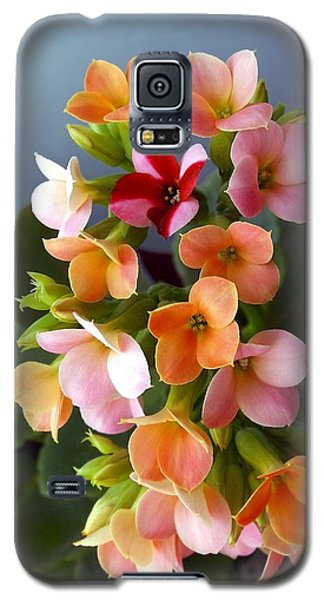 Galaxy S5 Case featuring the photograph The Special One by Danielle R T Haney