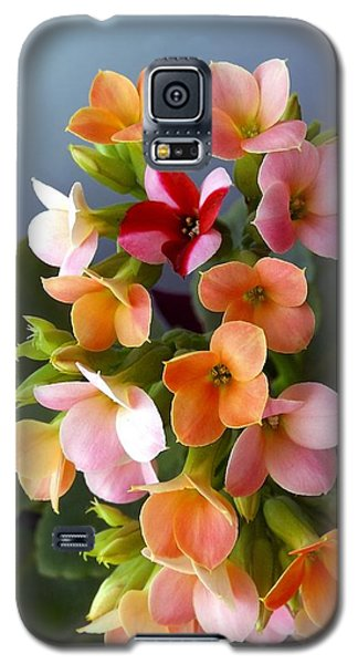 The Special One Galaxy S5 Case by Danielle R T Haney