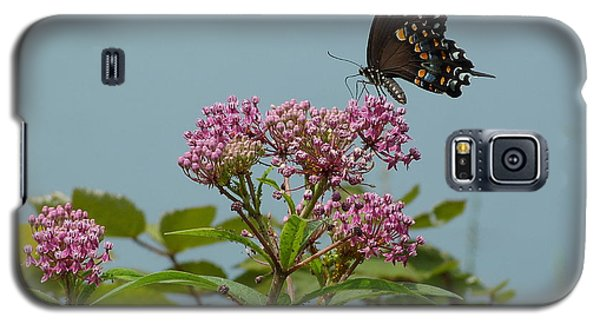 The Spicebush Swallowtail Of Prettyboy Reservoir Galaxy S5 Case by Donald C Morgan