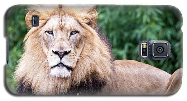 The Stare Down Galaxy S5 Case