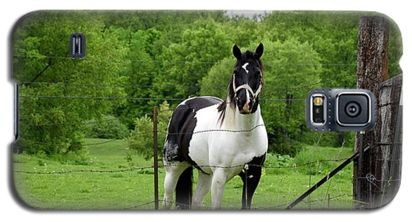 The Strong Horse Galaxy S5 Case