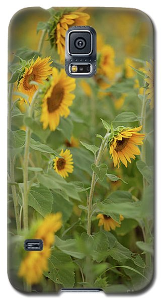 The Sunflower Patch Galaxy S5 Case