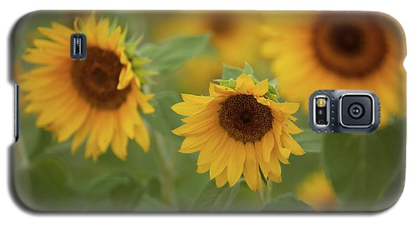 The Sunflowers In The Field Galaxy S5 Case