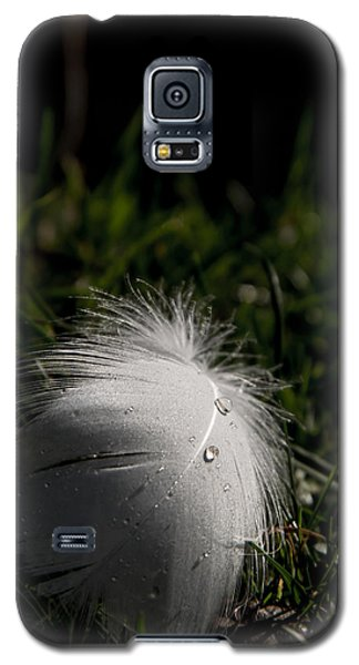 Galaxy S5 Case featuring the photograph The Swans Are Back by Odd Jeppesen