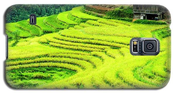 The Terraced Fields Scenery In Autumn Galaxy S5 Case