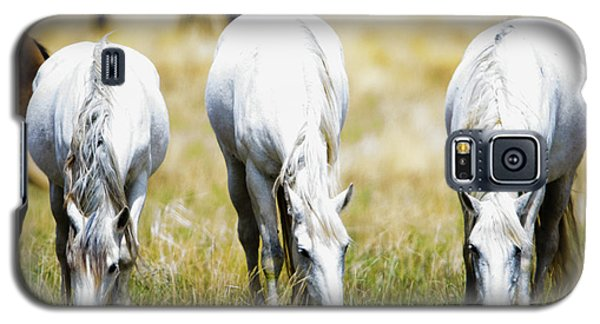 The Three Amigos Grazing Galaxy S5 Case