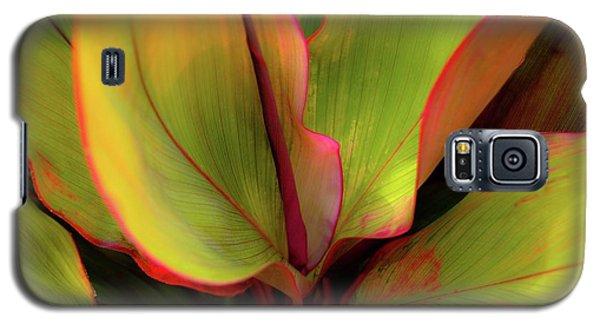 The Ti Leaf Plant In Hawaii Galaxy S5 Case