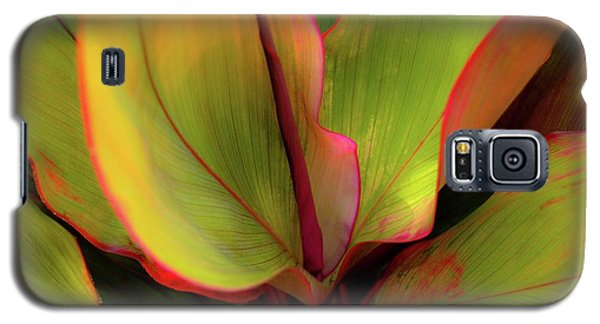 The Ti Leaf Plant In Hawaii Galaxy S5 Case
