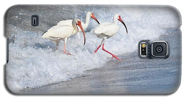 The Tide Of The Ibises Galaxy S5 Case