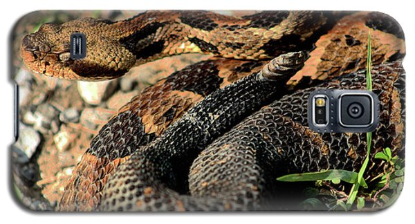 Galaxy S5 Case featuring the photograph The Timber Rattlesnake by Kyle Findley