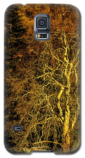 The Tree And The House Galaxy S5 Case