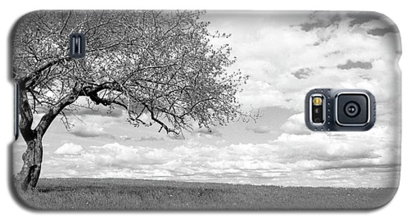 The Tree On The Hill Galaxy S5 Case