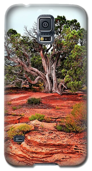 The Tree That Knows All Galaxy S5 Case