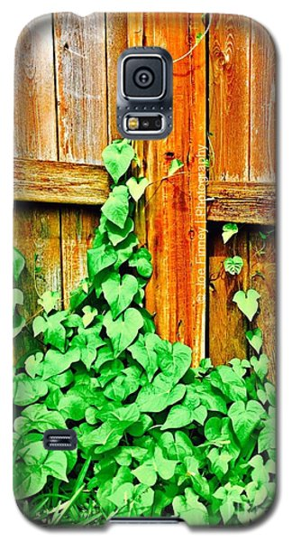 Galaxy S5 Case featuring the photograph The Vine - No.6275 by Joe Finney